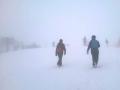 Chamois-Nella nebbia
